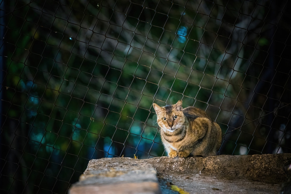 A stray kitty enters a backyard with caution