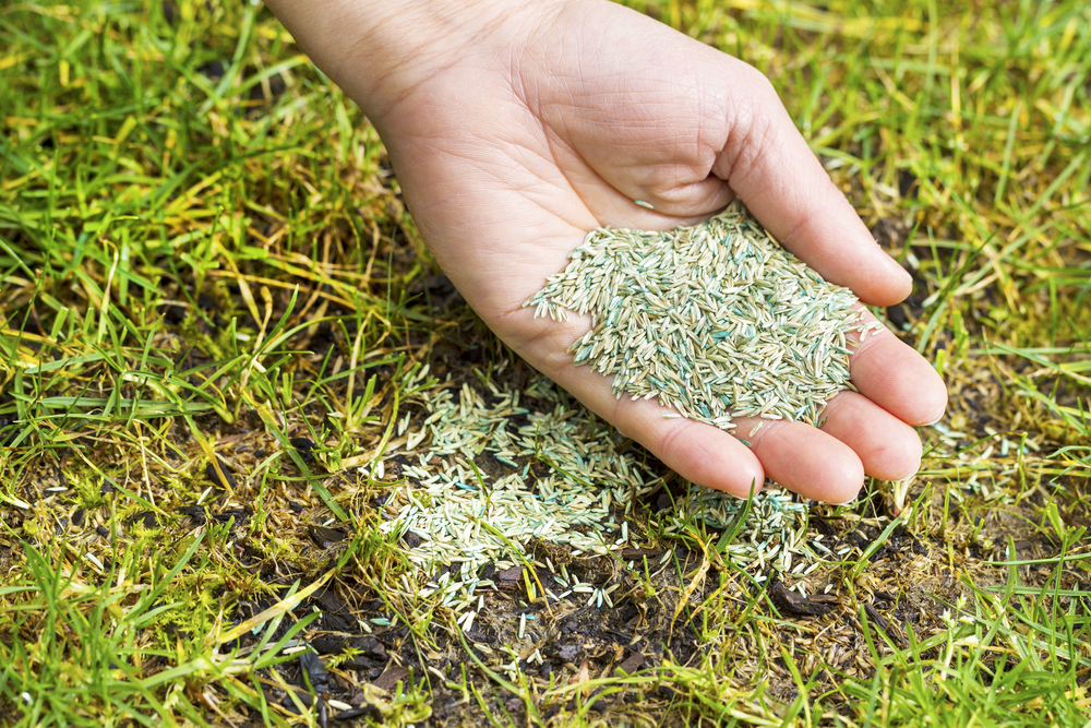 how long does grass seed take to grow