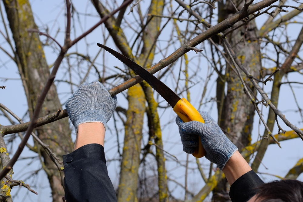 How to Sharpen a Tree Pruning Saw