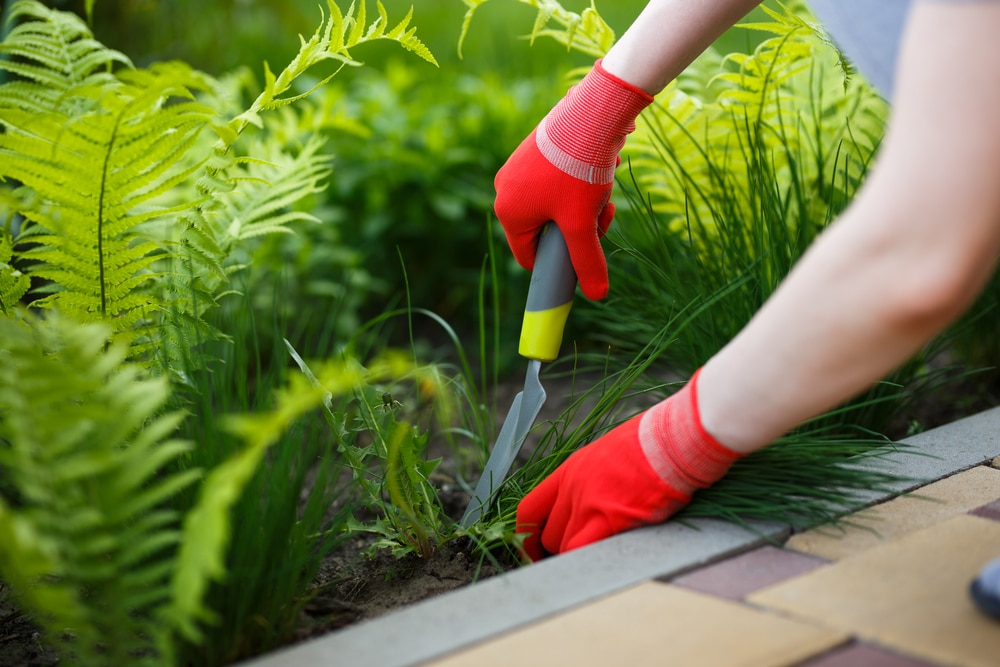 how to use a weeding tool